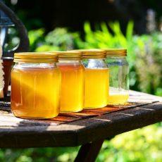 Le miel de Chadignac
