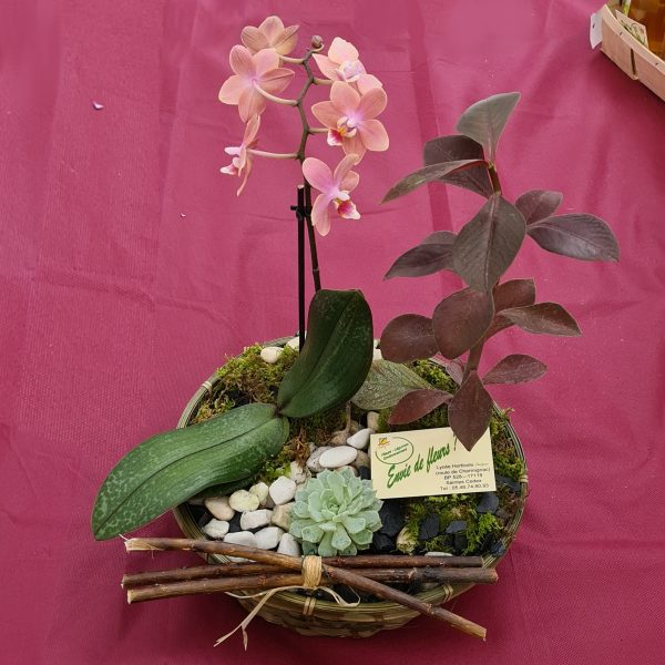 Composition phalaenopsis 01